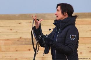 Suomenhevosen kouluttaminen ratsuksi, 6.6.2015 Rovaniemi